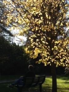 S AND TREE JPEG